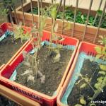 06 - La tristezza dei pomodori affogati